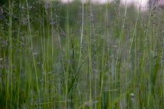 Sluit omhoog van wild gras stock afbeelding