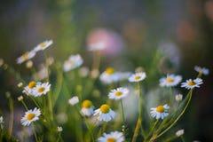 Sluit omhoog van wilde bloemen met een wervelingseffect achtergrond Stock Foto's