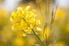Sluit omhoog van Wildflower overziend Athene tijdens de Lente Stock Foto