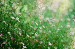 sluit omhoog van witte en roze bloem royalty-vrije stock afbeeldingen