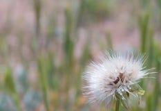 Sluit omhoog van witte wilde bloem royalty-vrije stock afbeeldingen