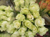 Sluit omhoog van zachte gevoelige witte rozen Stock Afbeeldingen
