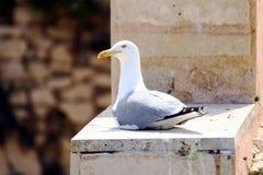 Sluit omhoog van zeemeeuw over een rots Royalty-vrije Stock Afbeelding