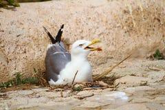 Sluit omhoog van zeemeeuw over een rots Stock Fotografie