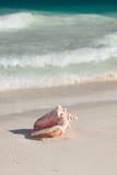 Sluit omhoog van zeeschelp op tropisch strand Royalty-vrije Stock Afbeeldingen