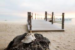 Sluit omhoog van zeeschelp op tropisch strand Royalty-vrije Stock Foto