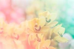 Sluit omhoog van Zoete kleurenorchidee in zachte kleur en onduidelijk beeldstijl Royalty-vrije Stock Afbeeldingen