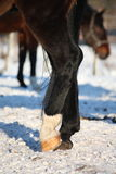 Sluit omhoog van zwarte paardbenen Stock Afbeeldingen