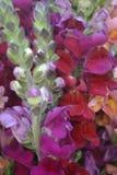 Sluit omhoog vele kleurrijke bloemen royalty-vrije stock fotografie