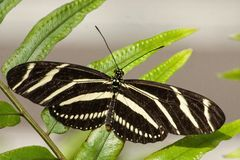 Sluit omhoog Vlinder Royalty-vrije Stock Foto