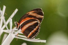 Sluit omhoog Vlinder Royalty-vrije Stock Fotografie