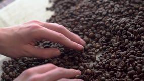 Sluit omhoog vrouwenhanden die slechte kwaliteit ` s van geroeste koffiebonen sorteren stock video