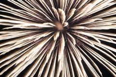 Sluit omhoog vuurwerk op donkere hemelachtergrond Stock Afbeeldingen