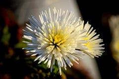 Sluit omhoog witte bloem met aardachtergrond Stock Foto's