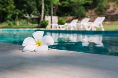 Sluit omhoog Witte Plumeria-bloem op de poolrand met water en strandbedachtergrond stock afbeeldingen