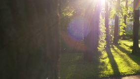 Sluit omhoog zonnestralen die door treesin glanzen een stad bij zonsondergang parkeert Langzame Motie stock videobeelden