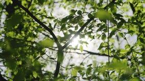 Sluit omhoog Zonnestralen die door weelderige groene bladeren glanzen stock footage