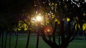 Sluit omhoog Zonnestralen die door weelderige groene bladeren glanzen stock video
