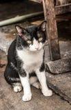 Sluit omhoog zwart-witte verdwaalde kat het letten op camera Royalty-vrije Stock Foto's