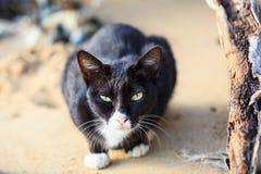 Sluit omhoog zwarte kat zitten op zand Royalty-vrije Stock Afbeeldingen