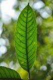 Sluit omhoog zwarte lijn in groen blad Stock Foto's