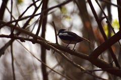 Sluit ontmoeting met leuke en uiterst kleine vogel royalty-vrije stock foto's