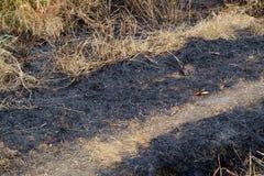 Sluit opgebrand gebied in het platteland stock foto's