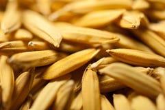 Sluit padie uit heeft omhoog geen shell Uitgespreid van de rijst van de padiejasmijn in de zon Thailand te drogen klaar om als ma Royalty-vrije Stock Foto's