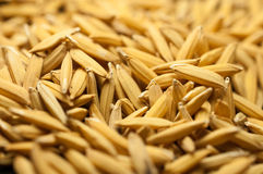 Sluit padie uit heeft omhoog geen shell Uitgespreid van de rijst van de padiejasmijn in de zon Thailand te drogen klaar om als ma Stock Fotografie