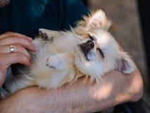 Sluit portret van de knappe vrolijke mens tegenhoudt leuke lange haarchihuahua de hond in de wapens is royalty-vrije stock afbeeldingen