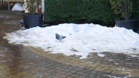 Sluit ter plaatse omhoog geschoten met troep van grijze duif met witte sneeuw, groene bomen, modder en beton Troep van vogels stock videobeelden