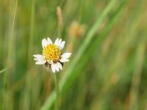 Sluit tot de bloem van de grasbloesem op selectieve aardachtergrond, Stock Foto