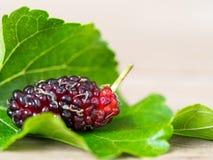 Sluit van moerbeiboom met omhoog groene bladeren op de houten lijst De moerbeiboom dit een fruit en kan worden gegeten in heeft r Stock Afbeelding