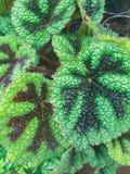 Sluit van Mooie Groene Installatie Royalty-vrije Stock Foto's