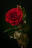 Sluit van rood steeg op donkergroen royalty-vrije stock foto's