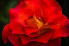 Sluit van rood steeg, symbool voor liefde en Romaans royalty-vrije stock foto