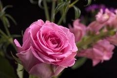 Sluit van roze steeg royalty-vrije stock afbeelding