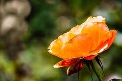 Sluit van sinaasappel steeg; vage achtergrond stock afbeelding