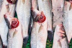 Sluit van verse vissen omhoog Reuzetoppositie, barramundi, zilveren toppositie royalty-vrije stock afbeeldingen