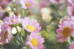 Sluiten de de lente magische roze bloemen omhoog op een vage achtergrond stock foto