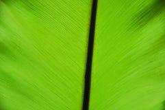 Sluiten-op groen blad royalty-vrije stock foto's