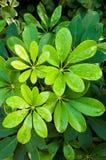 Sluiten-op groene bladerenspruiten met waterdrop royalty-vrije stock afbeeldingen