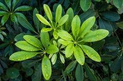 Sluiten-op groene bladerenspruiten met waterdrop royalty-vrije stock afbeelding