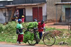 Slum dwellers in Kampala, Uganda, Africa. Kampala, Uganda - Aug 26, 2010: Native people carry bananas by bike in slum of Kampala. Nearly 40% of slum dwellers stock images