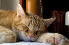 Slumber - do you know what cat dreams royalty free stock images