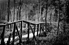 Slumpmässig bro i skog Royaltyfri Bild