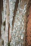 Slumpmässig vägg Florence Royaltyfri Fotografi