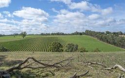 Slumpmässig vingård, nära Echunga, södra Australien Royaltyfri Fotografi