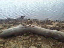slumpmässiga objekt över journal vid sjön royaltyfri fotografi