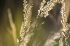 Slumpmässigt gräs för sommar i solnedgången royaltyfri foto